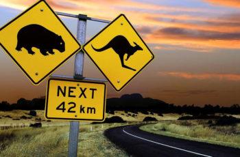 Dirigindo pela Austrália: Pare e espere o canguru atravessar a rua!