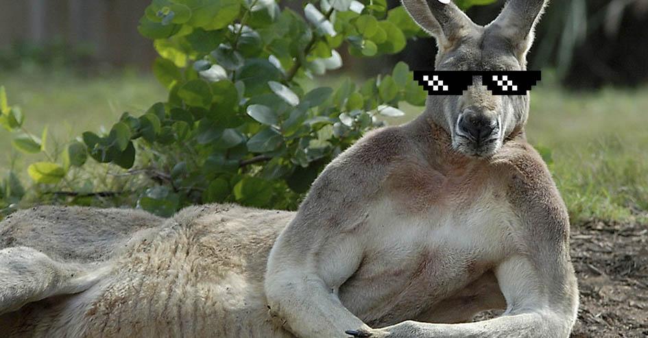Intercâmbio Austrália Dicas